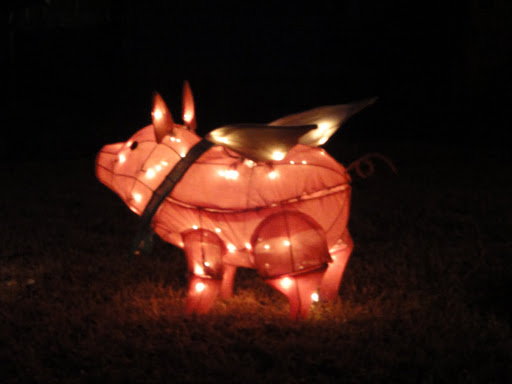 Christmas Pig hanging out in his yard.